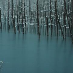 青い池/池/青/冬/水没林 Season fade  移ろう季節  …