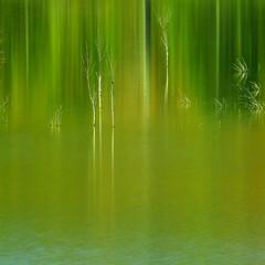 湖/映り込み/白樺/水没林/ふくろう湖/緑 Various green stories