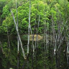 月光池/湖/水没林/秘境 Labyrinth  幌内・月光池・次郎湖