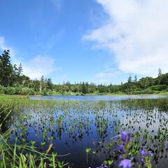 高原/湿原/泉/神仙沼/夏 青と緑のコンチェルト  北海道岩内郡共和…