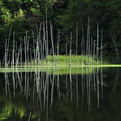 月光池/水没林/湖/秘境 クンネチュプの末裔  幌内・月光池・太郎湖