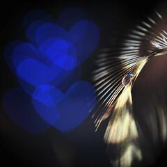 ハート/マクロ/ハートボケ/雫/羽根/フェザー The heart that is bl…
