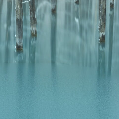 青い池/青/冬/水没林/水面 Continuous blue  北海道…