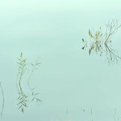 湖/ふくろう湖/水没林/水没草/映り込み/水面/... Water