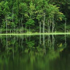 月光池/水没林/湖 湖上の輪舞曲 (ロンド)  幌内・月光池…