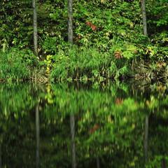 月光池/湖/水没林/秋 Illusion of lakeside…