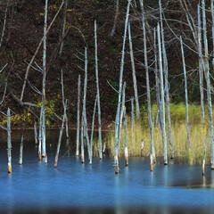 月光池/湖/水没林/青/水面/秘境/... MI・NA・MO  幌内・月光池・太郎湖…