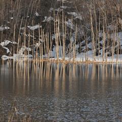 湖/池/湖沼/月光池/自然/風景/... 早春の水没林  北海道三笠市幌内 月光池