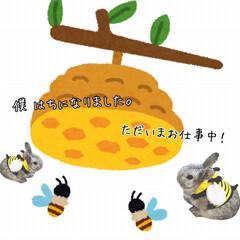 コスプレ/うさぎ/ペット ハチさんにコスプレして蜜を集め始めました…