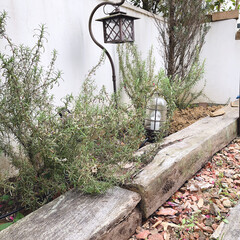 花壇/枕木/枕木花壇/ガーデニング/ガーデン/春のフォト投稿キャンペーン/... 10日間のゴールデンウィークに向けて、重…