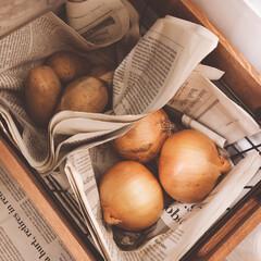 野菜の保存方法/暮らし/生活の工夫/生活の知恵 じゃがいもやたまねぎなどの根菜類の保存み…