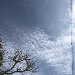 空/雲/花/LIMIAおでかけ部/フォロー大歓迎/猫/... 今日も、青空で もうすぐ 仕事が、終わり…