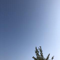 花/雲/空/フォロー大歓迎/おでかけ/旅行/... 今日は、天気も良く澄みきった青空でした🤗