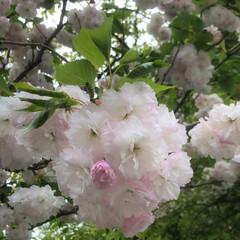 空/雲/花/フォロー大歓迎/おでかけ/旅行/... まだ、咲いてたのぉ〜💕🎶