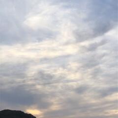 花/雲/空/LIMIAおでかけ部/フォロー大歓迎/猫/... 今晩から明日にかけて、これから 雨になる…