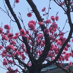 花/雲/空/LIMIAおでかけ部/フォロー大歓迎/猫/... 家のご近所の庭に 咲いて💕 いましたぁ〜😍