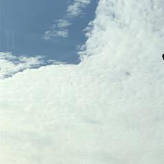 空/フォロー大歓迎/冬/猫/おでかけ/旅行/... 雲に青空が、覆われています でも、撮って…