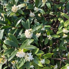 花/空/LIMIAおでかけ部/フォロー大歓迎/猫/おでかけ/... 白も並んで💕咲いていました ああ〜‼️良…