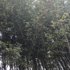 花/空/LIMIAおでかけ部/フォロー大歓迎/猫/おでかけ/... 家の近所を お散歩していると 竹が 青々…