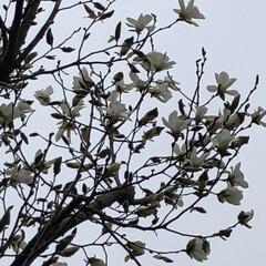 空/花/LIMIAおでかけ部/フォロー大歓迎/猫/おでかけ/... 咲いていましたぁ〜💕🤗