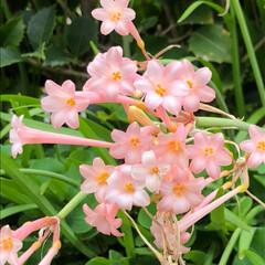空/花/LIMIAおでかけ部/フォロー大歓迎/猫/おでかけ/... 可愛い💕花🌸咲いていましたぁ🎶🤗