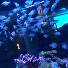 水族館/フォロー大歓迎/猫/おでかけ/旅行/風景 目が 蛍光色で、キラキラと輝いてました🤣…