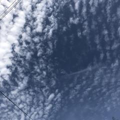 花/雲/空/LIMIAおでかけ部/フォロー大歓迎/猫/... 今日は、過ごしやすい日に なりました🤗