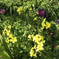 花/フォロー大歓迎/猫/おでかけ/旅行/風景 可愛い💕花が、咲いていましたぁ〜🎶💕🐾😍
