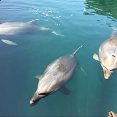 イルカ/おでかけ 大分県津久見市の、津久見いるか島。 人懐…