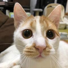 猫だもの/ねこ/春/にゃんこ同好会/うちの子ベストショット ヒゲがもひもひです