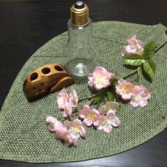 ローテーブル/和室/さくら/フォロー大歓迎/ひな祭り/ピンク/... 和室にさくら🌸が咲きましたぁ(*ˊᗜˋ)…(4枚目)