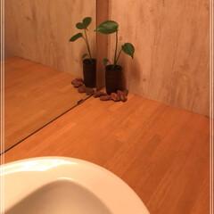ダイソー/100均/グリーン ダイソー植物5種類の巻٩(ˊᗜˋ*)و …(3枚目)