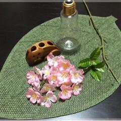 夜桜🌸/さくら🌸/雑貨/100均/ダイソー/インテリア/... 夜桜~🌸ライトアップ💡 お家夜桜も良い感…(4枚目)