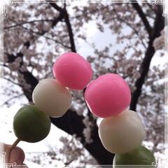 お花見/さくら/いちご飴🍓/三色団子🍡/春のフォト投稿キャンペーン/LIMIAおでかけ部/... 花より団子すぎる(≧∇≦*)  娘からお…(2枚目)