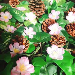 ローテーブル/和室/さくら/フォロー大歓迎/ひな祭り/ピンク/... 和室にさくら🌸が咲きましたぁ(*ˊᗜˋ)…(3枚目)