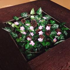 ローテーブル/和室/さくら/フォロー大歓迎/ひな祭り/ピンク/... 和室にさくら🌸が咲きましたぁ(*ˊᗜˋ)…(2枚目)