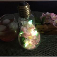夜桜🌸/さくら🌸/雑貨/100均/ダイソー/インテリア/... 夜桜~🌸ライトアップ💡 お家夜桜も良い感…(2枚目)