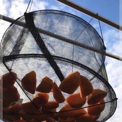 干し柿/次郎柿/柿/梨/秋/100均/... 干し柿作ってます٩(*´◒`*)۶♡ 美…(5枚目)