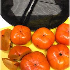干し柿/次郎柿/柿/梨/秋/100均/... 干し柿作ってます٩(*´◒`*)۶♡ 美…(3枚目)