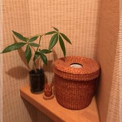ダイソー/100均/グリーン ダイソー植物5種類の巻٩(ˊᗜˋ*)و …(2枚目)