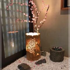 玄関インテリア/桜/春のフォト投稿キャンペーン/おでかけワンショット 🌸さくら🌸 LIMIAもさくらの写真がた…