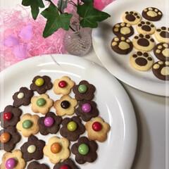 肉球/型抜きクッキー/LIMIAごはんクラブ/フォロー大歓迎/猫/にゃんこ同好会/... お花クッキー🌸 肉球クッキーฅ^• ·̫…