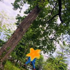 緑/お散歩/風景/暮らし 息子とお散歩♬林の中にポツンと木のブラン…