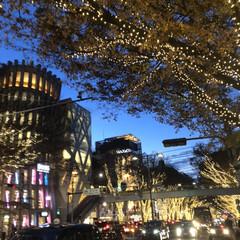 クリスマス/表参道/イルミネーション 表参道、イルミネーションが今年もきれいで…