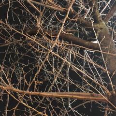 風景/フォト/写真/桜/春/LIMIAおでかけ部 昨夜帰りに桜の木に蕾がついてるのに気がつ…