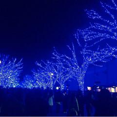 カップルにおすすめ/クリスマス/イルミネーション/渋谷/青の洞窟/フォロー大歓迎 青の洞窟って知ってますか?渋谷の代々木公…