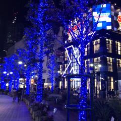 青の洞窟/渋谷/イルミネーション/クリスマス 青の洞窟が11月30日から始まり、渋谷の…