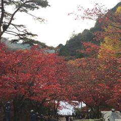 景色/きれい/寒かった/山登り/紅葉/秋 去年の今頃高尾山に登った時、紅葉がきれい…