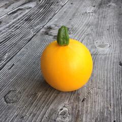 夏野菜/家庭菜園/初物/ガーデニング/ズッキーニ 初物のズッキーニ、今朝収穫! 丸い形をし…(1枚目)