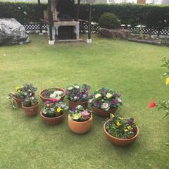 葉牡丹/パンジー/冬の花/ガーデニング/玄関/雑貨/... 今日は朝から夏の花と冬の花の入れ替えして…